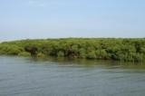 Dự kiến phá 150ha rừng ngập mặn, lấn biển tạo mặt bằng làm công nghiệp