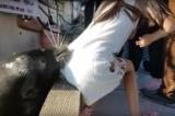 Video: Sư tử biển bất ngờ ngoạm vào váy và kéo bé gái xuống nước