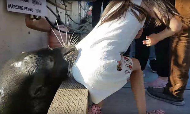 Sư tử biển ngoạm vào váy bé gái lôi cô bé ngã nhào khỏi bến tàu, rơi xuống nước. (Ảnh chụp màn hình Youtube)
