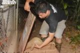 93 con tê tê được thả về với rừng tự nhiên