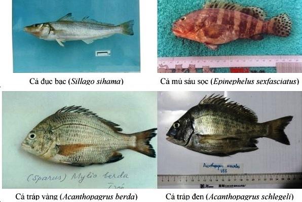 hai san tang day, hải sản tầng đáy miền Trung