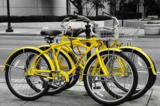 Công ty dịch vụ xe đạp công cộng Trung Quốc đóng cửa vì 90% xe bị đánh cắp