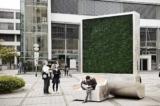 'Bảng hiệu rêu' có thể lọc không khí tầm gần tương đương 275 cái cây (video)