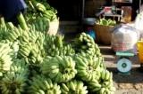 Bộ Nông nghiệp lập cục chế biến và phát triển thị trường để 'giải cứu' nông sản