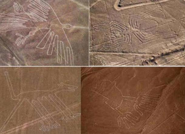 Các hình vẽ khổng lồ mô tả động vật trên cao nguyên Nazca (ảnh: ancient-origins.net)