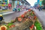 'Khủng hoảng niềm tin' ở Việt Nam, đâu là gốc rễ?