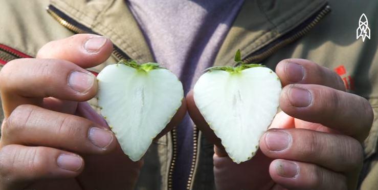 dâu tây trắng