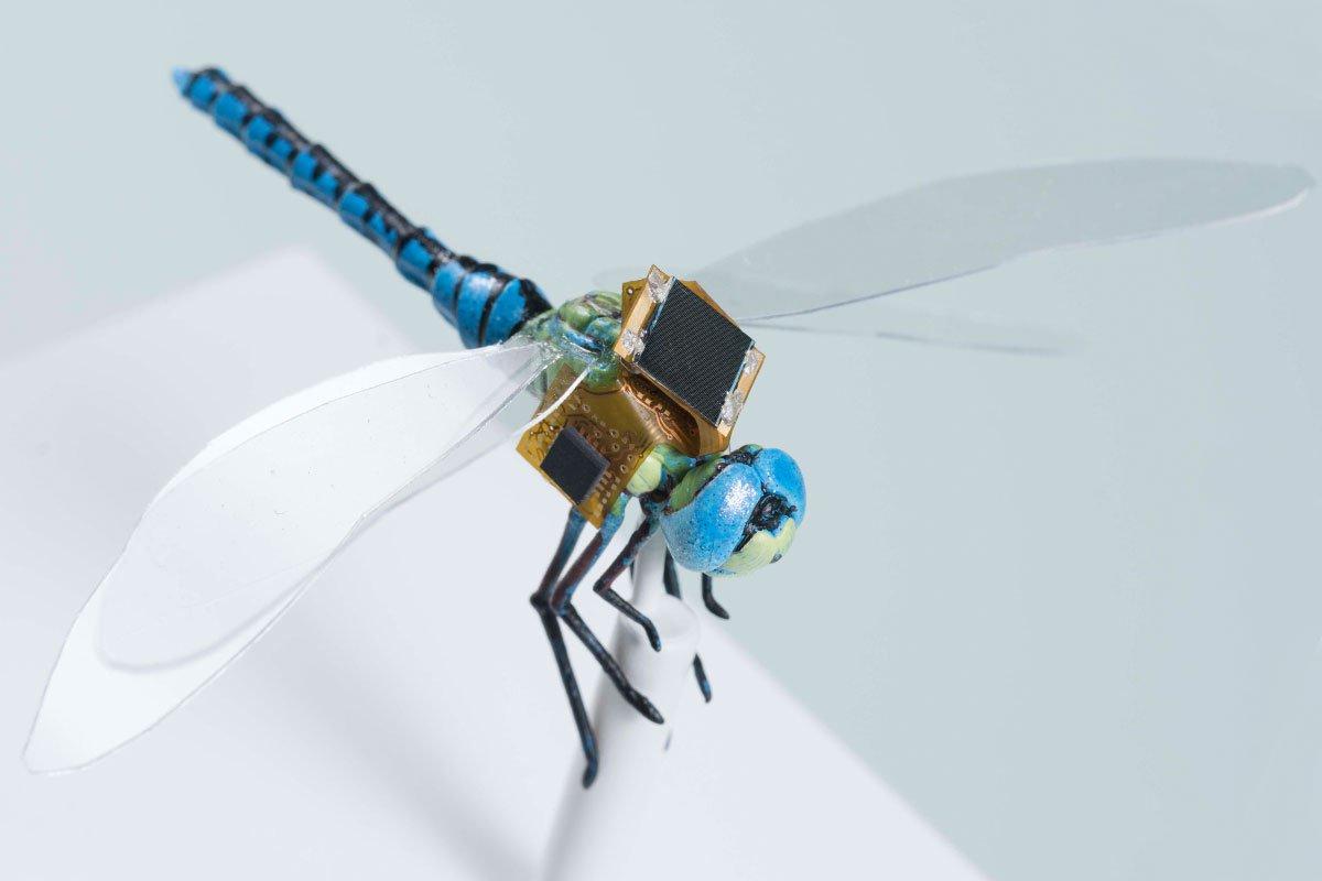 Gắn bộ điều khiển cho chuồn chuồn biến đổi gen và biến nó thành máy bay drone (ảnh: dronelife.com)