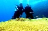 Văn phòng Chính phủ yêu cầu rà soát dự án nhận chìm bùn thải xuống biển Bình Thuận