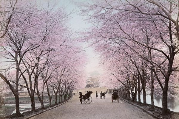Những bức ảnh về nước Nhật vào thế kỷ 19 được lưu giữ tại Thư viện công cộng New York (Mỹ) phản ánh đời sống của người Nhật lúc bấy giờ. Trong ảnh là hoa anh đào và các du khách ở Tokyo.