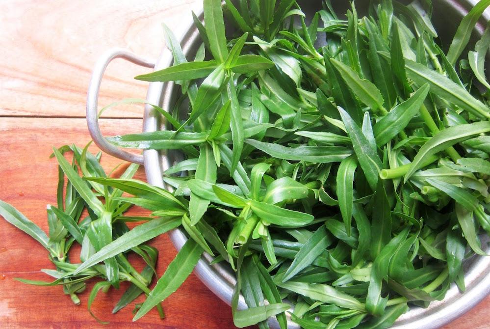Rau ngổ trâu, thân rỗng, lá dài. Khác với rau ngổ hương mà trong bài nhắc đến (ảnh qua fruitiecake.blogspot.com)