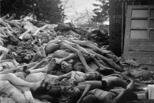 Tâm lý gì đằng sau sự thờ ơ trước những cuộc diệt chủng? - Kỳ 1: Sự méo mó được huấn luyện từ bên trong