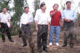 Kết luận thanh tra: 39/41 dự án sử dụng rừng ở Phú Yên trái quy định
