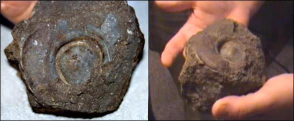 Câyđinh tán cắm ngập vào phần thân gỗ hóa thạch.Kết quả phân tích cho thấy nó được làm bằng một loại hợp kim, trong thành phần có chứa cả nhôm.