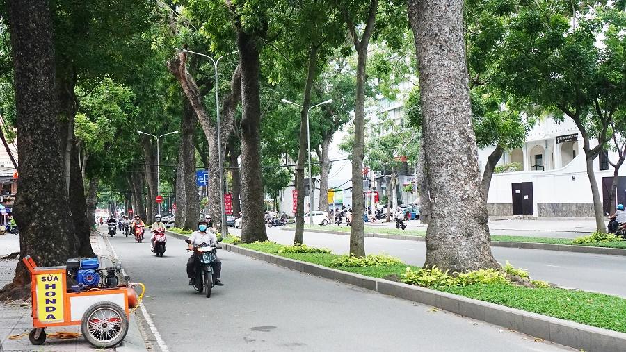 Con đường rợp bóng với ba hàng cây xanh cao lớn.