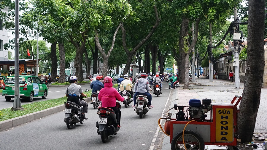 Phần lớn cây xanh trên đường Tôn Đức Thắng là cây xà cừ (sọ khỉ), thuộc họ gụ châu Phi, rễ cọc, khả năng chịu hạn, chịu lũ tốt, sinh trưởng khỏe mạnh.