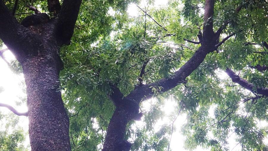 """Tháng 3/2016, trước thông tin hàng trăm cây xanh trên đường Tôn Đức Thắng sẽ bị đốn hạ để thực hiện các dự án đô thị, nhiều giảng viên, sinh viên, người dân đã giơ biểu ngữ và kêu gọi """"Đừng cắt bỏ lá phổi Sài Gòn"""" trên con đường."""