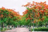 Hải Phòng: Thành phố hoa phượng đỏ