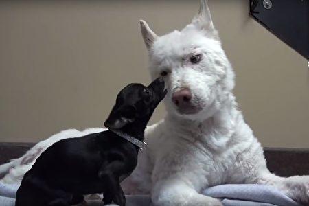 chú chó gặp lại ân nhân