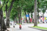 Hàng cây xanh trăm tuổi sắp bị đốn hạ, di dời để xây cầu Thủ Thiêm 2 (TP.HCM)