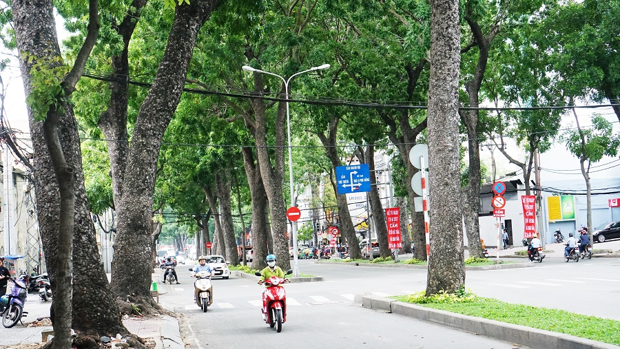 Hoàn bù lại bằng hoặc nhiều hơn số lượng cây xanh đã chặt, di dời để tạo mảng xanh và mỹ quan cho công trình.