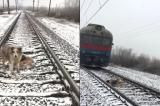 Chú chó dũng cảm không bỏ rơi bạn bị thương trên đường ray khi tàu hỏa chạy qua