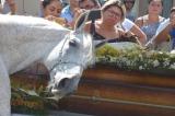 Chú ngựa gục đầu bên quan tài, đau buồn tiễn biệt chủ