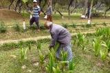 Người đàn ông kiên trì trồng hơn 17.500 cây xanh liên tục trong 48 năm