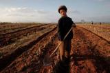Bắc Hàn thiếu lương thực trầm trọng do hạn hán kỷ lục