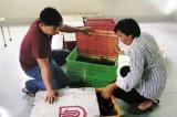 Vận chuyển 3.500 con cá sấu từ Campuchia về Việt Nam: Khởi tố 4 bị can