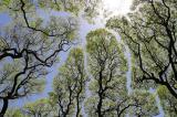 Những bức ảnh cho thấy cây cối biết nhường nhịn nhau