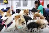 Công ty Thái Lan khuyến khích nhân viên mang thú cưng đi làm để giảm áp lực