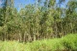 Cà Mau: Bồi thường hơn 4 tỷ đồng cho 130 hộ dân bị thu hồi đất trái quy định