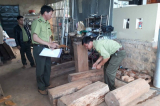 Lâm Đồng: Điều tra nguồn gốc 6 lóng gỗ thông đỏ tại nhà Trưởng BQL rừng Đại Ninh