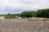 Nghệ An: Rừng ngập mặn suy giảm nghiêm trọng