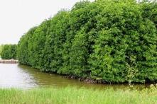 Cho khai thác trắng 25,8 ha rừng đặc dụng, 5 cán bộ Sở NN-PTNT Bến Tre lĩnh án tù