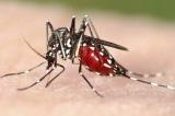 Bộ Y tế họp khẩn phòng chống dịch sốt xuất huyết