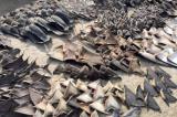 Ecuador bắt tàu cá Trung Quốc vì nghi đánh bắt lậu