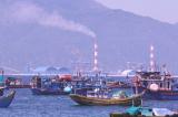 Bình Thuận: Cá, sò chết bất thường tại khu vực biển Nhà máy Nhiệt điện Vĩnh Tân 4