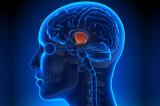 Suối nguồn tươi trẻ có thể ẩn sâu ngay trong bộ não chúng ta