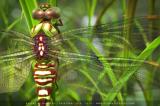 Video: Tỷ lệ vàng đằng sau những tác phẩm của tạo hóa