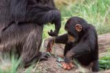 Video: Các bà mẹ động vật dạy con kỹ năng sống như thế nào?
