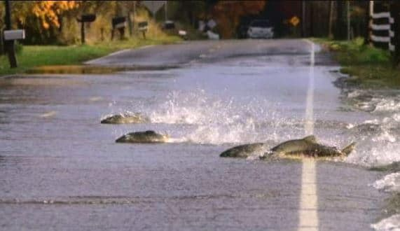 cá bơi qua đường