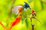 """Chiêm ngưỡng vẻ đẹp rực rỡ của những loài """"chim thiên đường"""""""