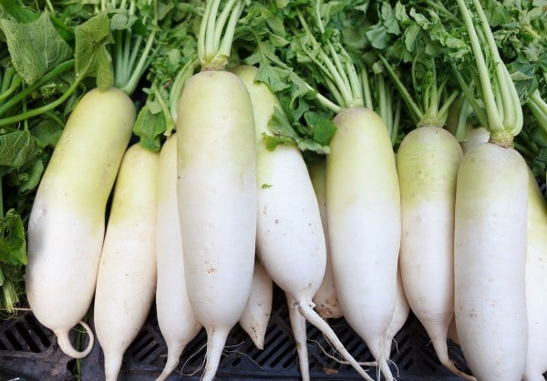 nhân sâm trắng, củ cải trắng