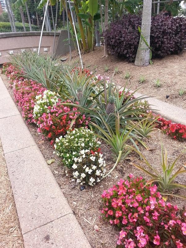 Vườn rau miễn phí