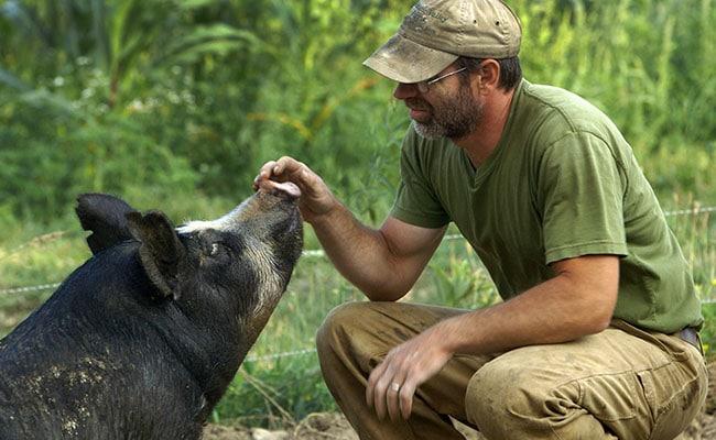 """Hà Nội: Công chiếu phim """"Con lợn cuối cùng"""" (The Last Pig) (20/1)"""