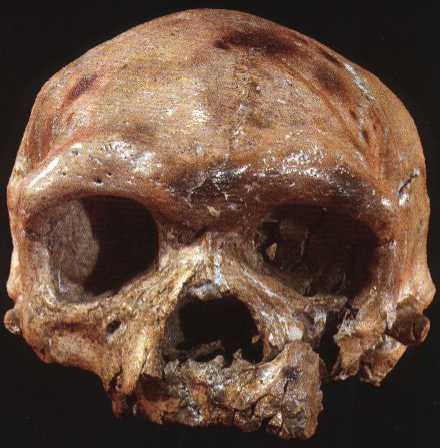Hộp sọ 260.000 năm tuổi tìm thấy ở Trung Quốc có thể viết lại lịch sử tiến hóa