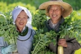 Bí quyết sống lâu và khỏe mạnh của người Nhật Bản
