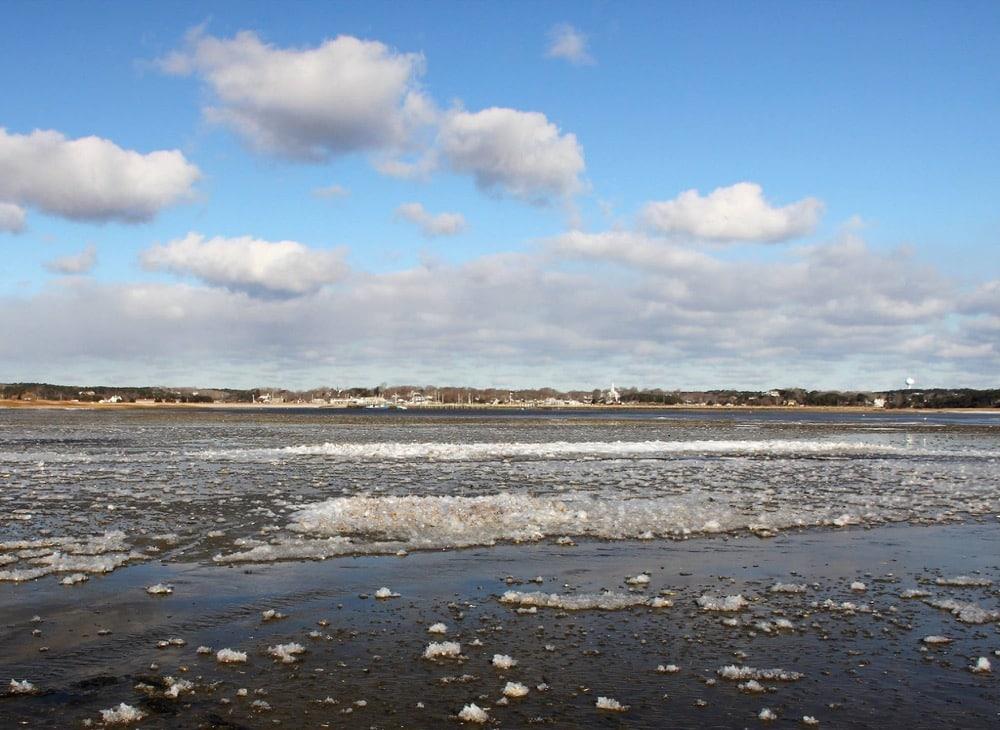 Mỹ: Trời lạnh đến mức cá mập cũng… bị sốc lạnh, chết cóng